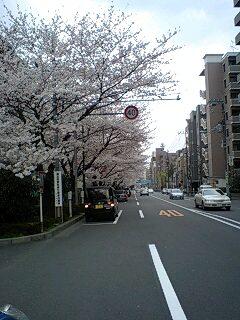 080328_1501~0001千川通りの桜1