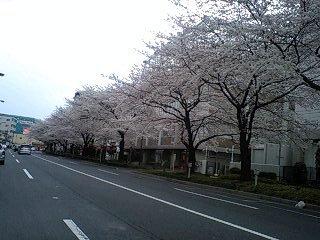 080328_1636~0001千川通りの桜6