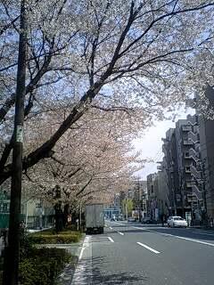 080404_1212~0001千川通りの桜