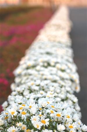 whiteroad