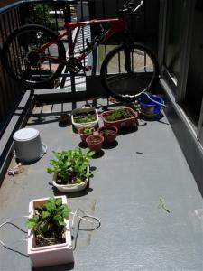 カメ家庭菜園