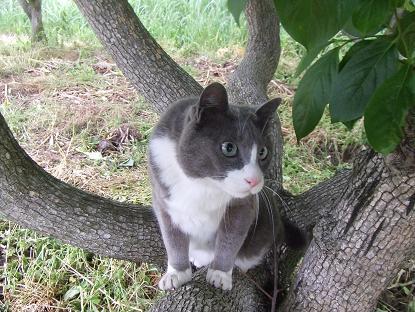 1木登り♪