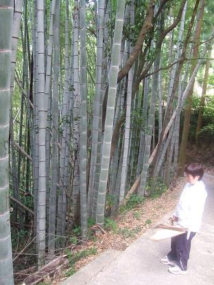 6竹林とおかん