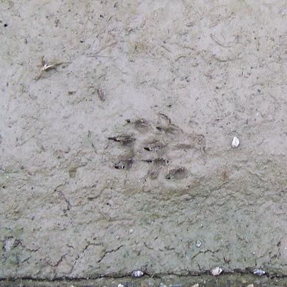 4怪しい足跡