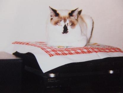 2006_1104香箱すわり0107