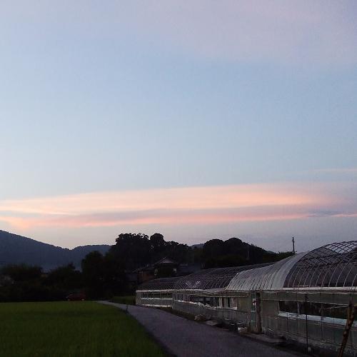 5ピンクの雲