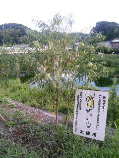 1怪しい植物