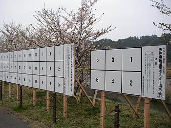 桜と選挙ポスター掲示板