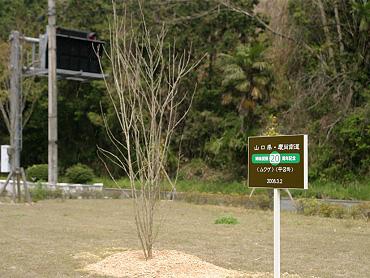 山口県・慶尚南道姉妹提携20周年記念植樹