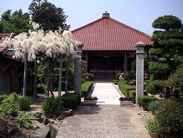 西光寺のフジ-1