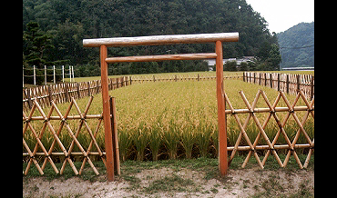 香川県綾上町の献穀田