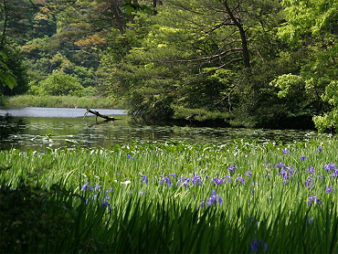 二反田ため池の湿地植物群落
