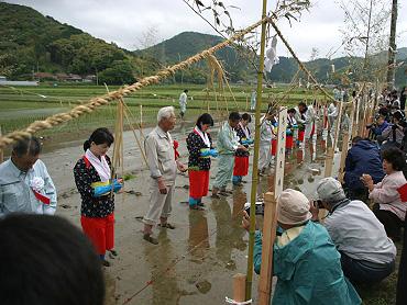 「献穀米」お田植え式-4