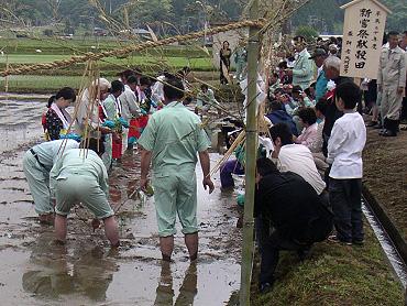 「献穀米」お田植え式-5
