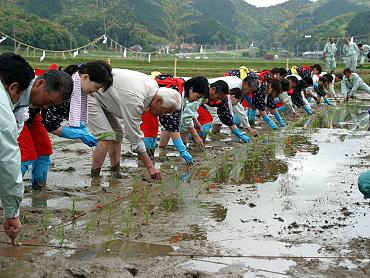 「献穀米」お田植え式-7