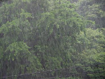 よく降る雨です
