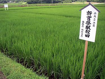 「平成20年度 新嘗祭上納 献穀米お田植え式」の田