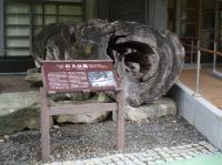 屋久杉自然館3