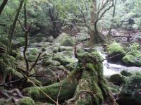 白谷雲水峡川7
