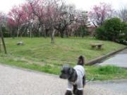 080330豊公園にて