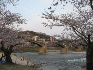 080405錦帯橋とさくら
