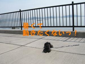 080412散歩②動きたくない!
