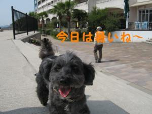 080412散歩暑いね~