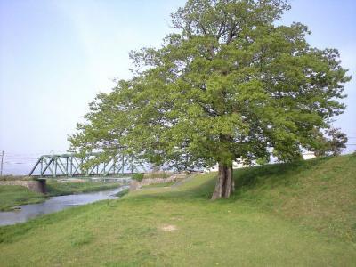 2008.5.17-1