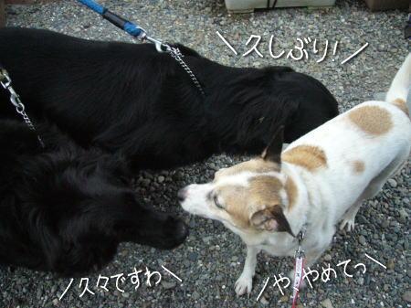 2008-07-20-4.jpg