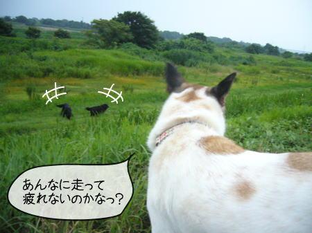 2008-07-20-9.jpg