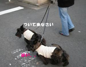 a_20080415220256.jpg