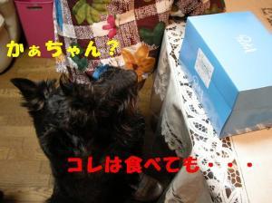 a_20080417214639.jpg