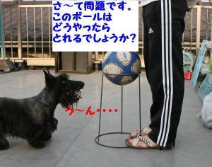 a_20080509163953.jpg