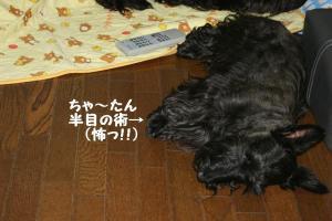 a_20080525221321.jpg
