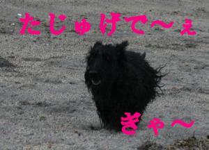 a_20080810194417.jpg