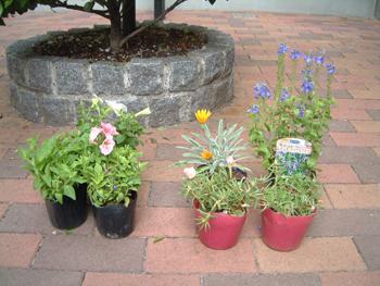 夏のコンテナ植物