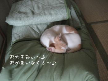 おこたでおやすみ