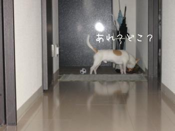 4(4.jpg