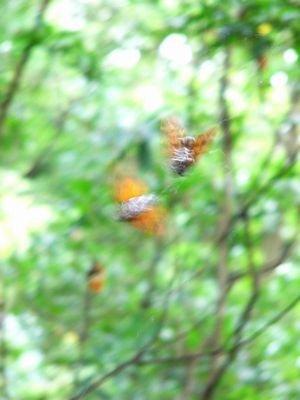蜘蛛の巣にかかった蝉