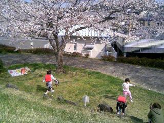 土手の桜②