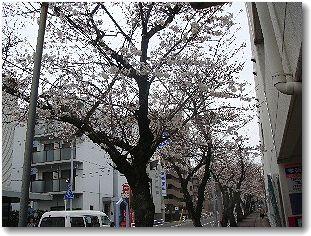 20080329sakura1.jpg