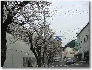 20080329sakura2.jpg