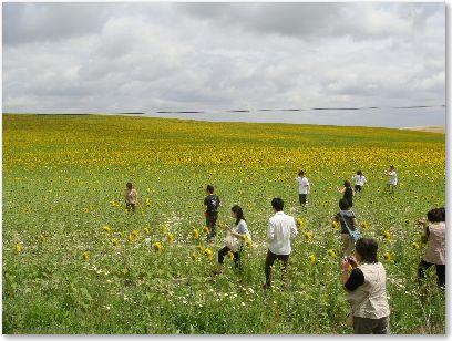 20080523himawari2.jpg