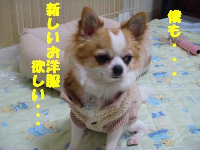 20080309_2.jpg