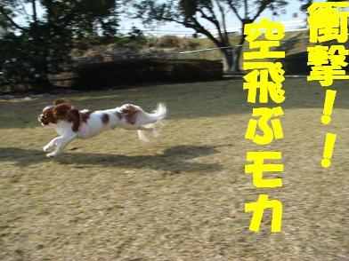 20080320_1.jpg