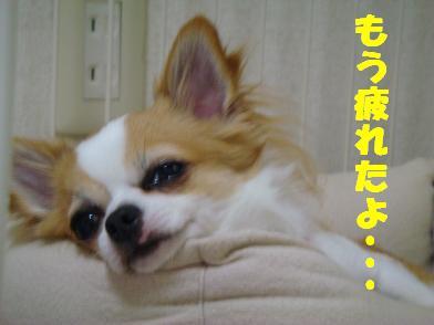 20080516_2.jpg