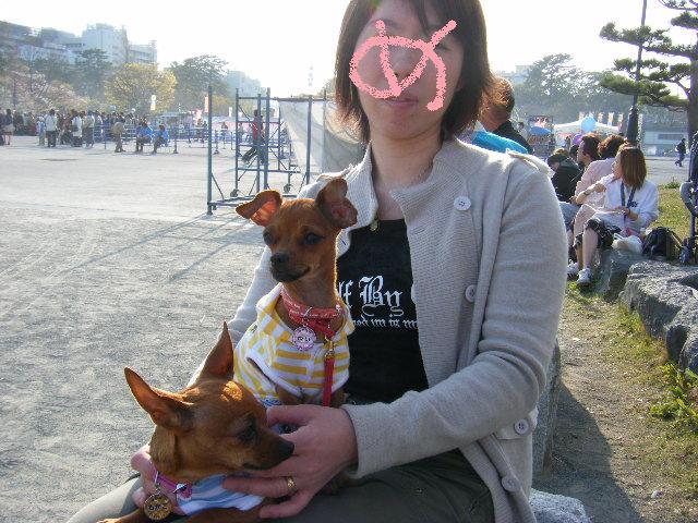 静岡祭りめっこ
