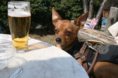 329アンツンビール