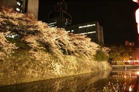 駿府公園夜桜
