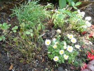 garden08042.jpg